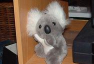 Uncanned Koala