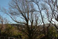 Mid Winter Trees