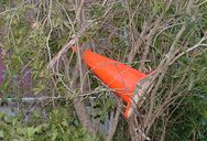 Cone in a Tree
