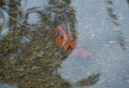 Submerged Leaf