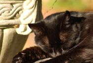 Cat. Sleeping.