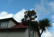 Tree, House, Clouds