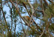 Bird among the leaves
