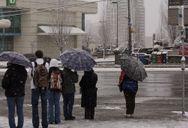 Snowed On Line