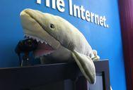 Shark eating webcam