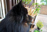 Surveying the back yard